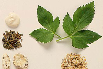 Did You Know Can Grow Medicinal Plants In Your Garden Here Are 35 Healing
