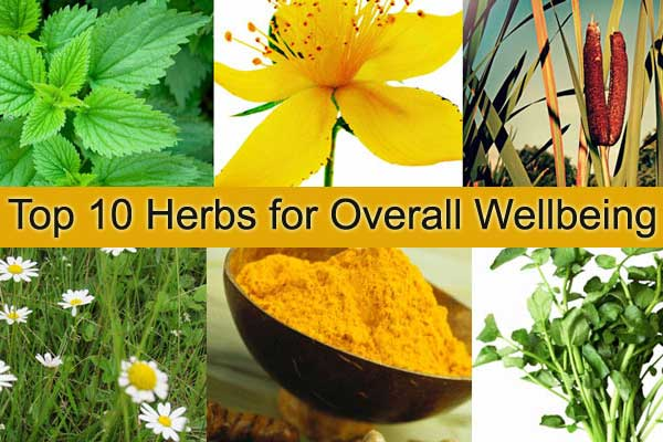 health-wellbeing-herbs