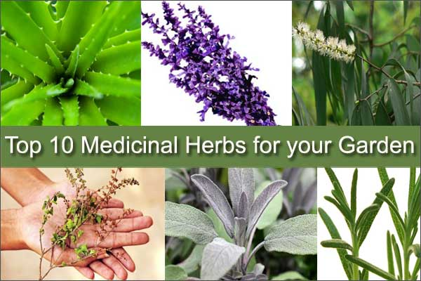 Top 10 Medicinal Herbs to Grow in Your Garden | Medicinal Plants