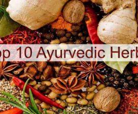 top-ayurvedic-herbs