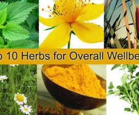 health-wellbeing-herbs