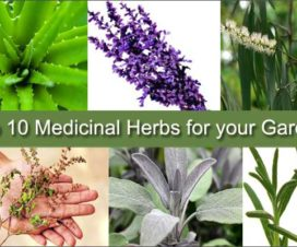 medicinal-herbs-for-garden